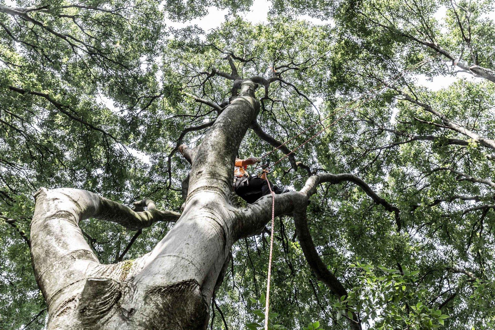 Kletterausrüstung Baumpflege : Benk gmbh